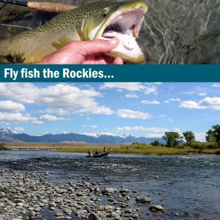 Fliegenfischerreise Montana USA