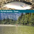 Fliegenfischerreise Österreich Traun
